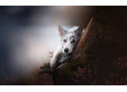 狗,动物,模糊,看着观众,景深,树桩613576