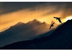 黑暗,天空,阳光,鸟类,性质,动物,山559312