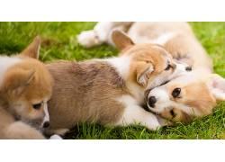 小动物,小狗,动物,狗607954