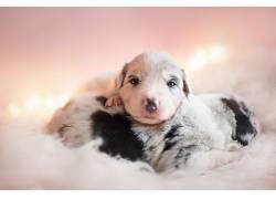小动物,小狗,狗553434
