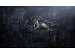 黑暗,性质,狼,动物478177