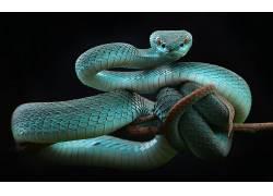 蛇,动物,爬行动物471589