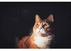 黑暗,抬头看,动物,猫556681
