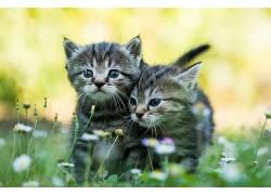 小动物,小猫,猫424132