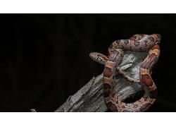 蛇,动物,爬行动物629587