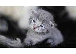小动物,小猫,猫474973