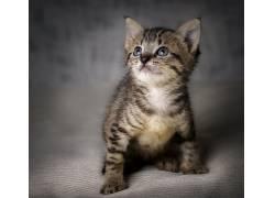 小动物,小猫,猫602884