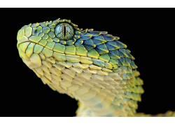 蛇,爬行动物,动物,宏,蜥蜴鳞片452328