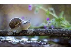 动物,蜗牛,宏440140