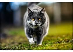 猫,动物632788