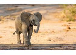 小动物,性质,动物,象552430