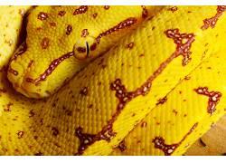 蛇,爬行动物,动物422732