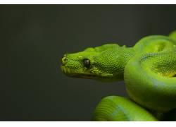 蛇,爬行动物,动物452325