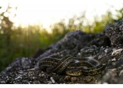 蛇,爬行动物,动物452329
