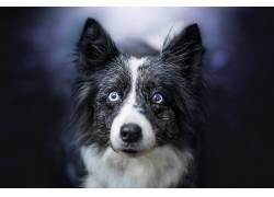 狗,动物,眼睛,面对570351