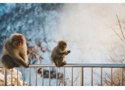 摄影,性质,野生动物,猴,面对,雪384461
