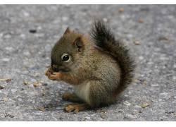 小动物,松鼠,动物388421