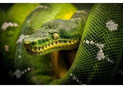 蛇,爬行动物,动物452330