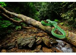 蛇,爬行动物,动物452331