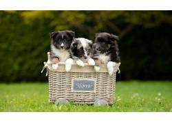 狗,动物,篮555480