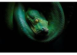 黑暗,蛇,爬行动物,动物,绿色588505