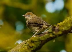 摄影,性质,鸟类,野生动物,麻雀,背景虚化381665