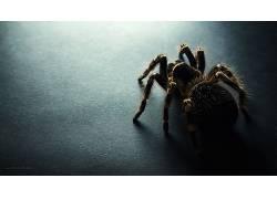 黑暗,蜘蛛,动物,昆虫569794