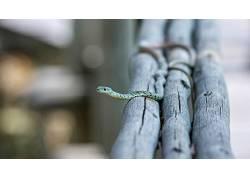 摄影,特写,景深,动物,蛇,木,科449955