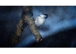 黑暗,雪,冬季,鸟类,动物621683