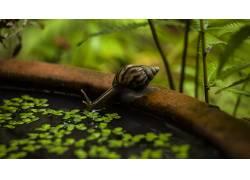蜗牛,动物,水,特写,模糊,性质618586