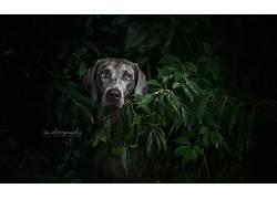 黑暗,面对,动物,植物,狗558056