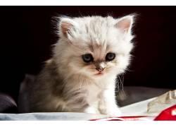 小动物,猫,动物,小猫689442