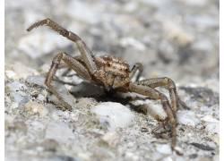 蜘蛛,动物,昆虫387281