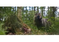摄影,野生动物,树木,动物,植物,浣熊,背景虚化384446