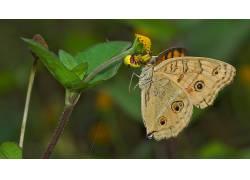 蜘蛛,动物,花卉,蝴蝶387291