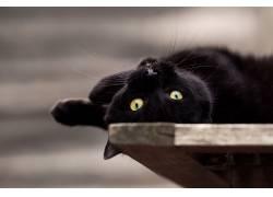 黑猫,猫,动物620615