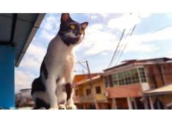 猫,厄瓜多尔,动物,黄眼睛537438