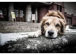 狗,动物,雪636078