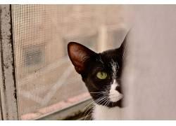 黑猫,猫,动物的眼睛,猫眼,绿眼睛644668