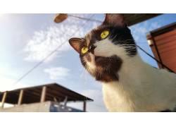 猫,厄瓜多尔,动物,黄眼睛537439