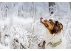 狗,动物,雪669119