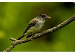 摄影,野生动物,麻雀,鸟类,宏,模糊,吃383530