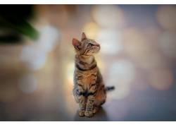 猫,抬头看,动物572229