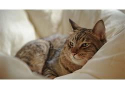 猫,摄影,动物497006