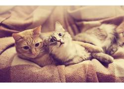 猫,摄影,动物497008