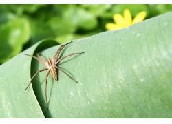 蜘蛛,动物387234