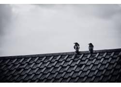 屋顶,单色,动物,鸟类479246