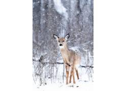 动物,雪,性质405819