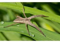 蜘蛛,动物387235