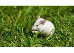 山,动物,仓鼠,老鼠440372